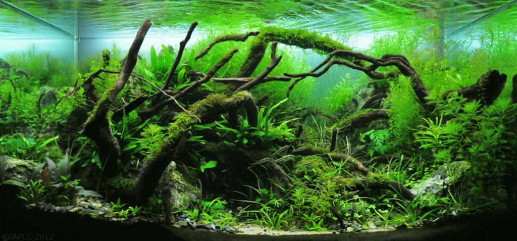 Java moss scientific name
