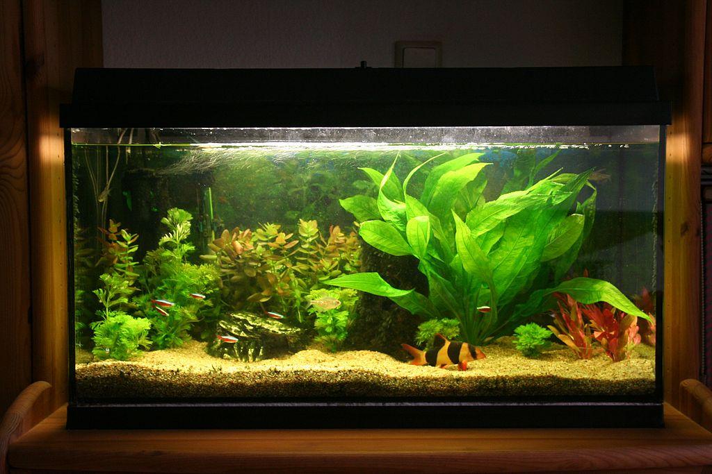 How do fish sleep in a tank