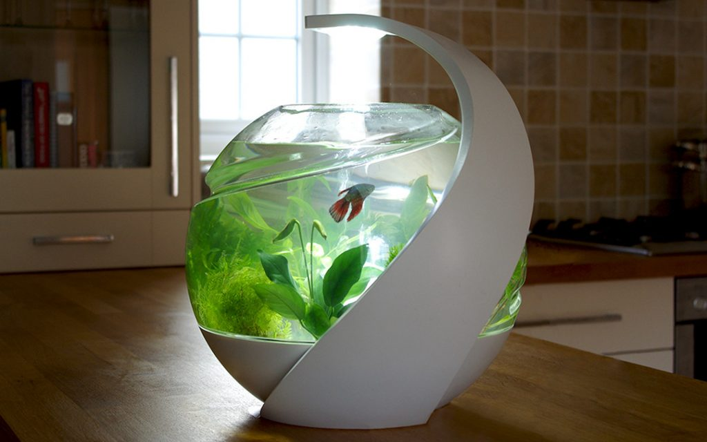 Can Guppies live alone