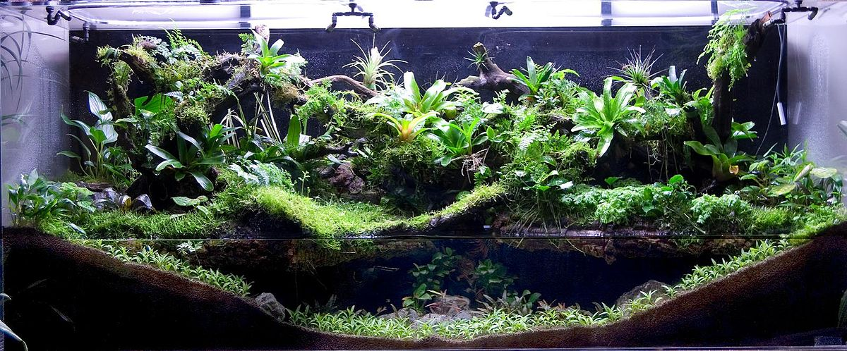 what is appealing about paludarium